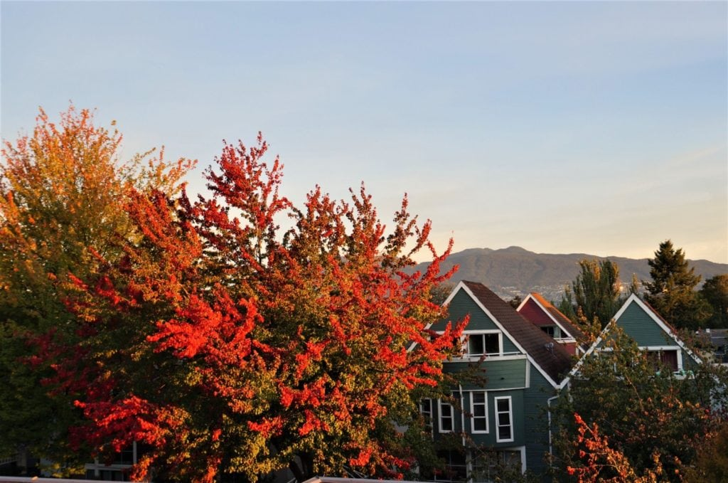 Thanksgiving a Vancouver : amities et paysages rougeoyants